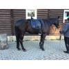 Седло Пиаффе купить в интернет магазине конной амуниции